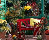 Chrysanthemum, Pyracantha / Feuerdorn, Acorus 'Ogon' / Goldkalmus, Hedera / Efeu