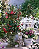 Camellia japonica (camellia), Pieris (shadow bells)