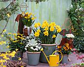 Put daffodil in tub in autumn