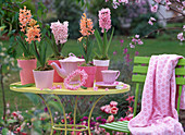 Hyacinthus 'Gipsy Queen', 'Pink Pearl', 'Apricot Passion'
