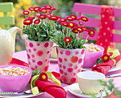 Bellis (red daisies) in dotted vases