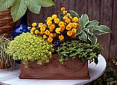 Saxifraga, Chrysanthemum, Hosta, Origanum, Gentiana