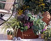 Carex Evergold, Bergenia Baby Doll, Hosta Wide Brim, Euphorbia Amygdaloide