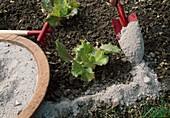 Sprinkle ash against snails