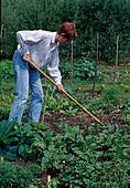 Loosen up soil in the vegetable garden