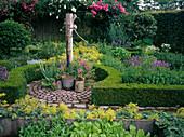 Cottage garden, Alchemilla mollis, Roses, Viola cornuta, Buxus