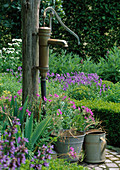 Rotary pump, bucket and watering can, geranium and Buxus