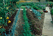 Development of a vegetable garden, August