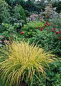 Carex oshimensis 'Evergold', Monarda