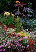 Summer bed, Pelargonium, Salvia, Canna, Ricinus