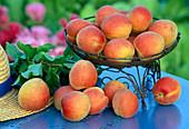 Apricot 'Bergeron'