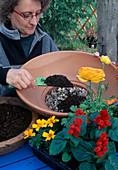 Plantting summer flowers in bowl. Filling soil - (1/3)