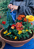 Plant bowl with summer flowers - water well on the pre-planted bowl