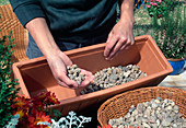 Plant box with autumn flowers. Fill in gravel as drainage layer