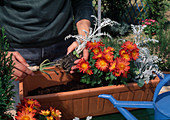 Plant box with autumn flowers
