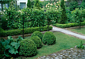 Buxus (book ball), Pyrus (pear on the trellis)