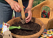 Sowing Summer Flowers - Lightly press the earth with wooden stick