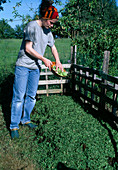 Aufbau eines Kompostes 4. Step: Pflanzliche Küchenabfälle auf den Kompost 4/8