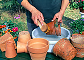 Pots in autumn clean for wintering