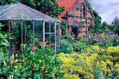 Greenhouse and bed with Alchemilla mollis (lady's mantle)