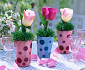 Dotted vases with Sagina (star moss)