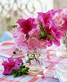 Rhododendron and Azalea flowers