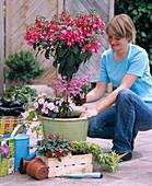 Under planting of fuchsia trunk