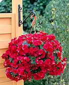 Wall bracket for hanging baskets
