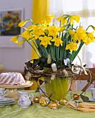 Narcissus Hybrid 'Gold Medal' (Daffodil)