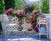 Flower benches with Petunia 'Double Pirouette'