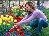 Young woman cutting tulipa (tulip bouquet)