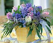 Hyacinthus orientalis 'King Kodro' (dunkelblau)