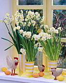 Narcissus 'Ziva' and 'Bridal Crown' (Daffodil) at the window