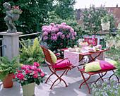 Dachterasse mit Rhododendron