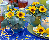 Helianthus annuus (mini sunflower)