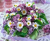 Syringa (lilac), Leucanthemum (marguerite)