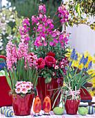 Erysimum 'Sweet Sorbet' (Gold Lacquer), Hyacinthus (Hyacinth)