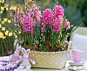 Hyacinthus orientalis (hyacinth) in oval basket