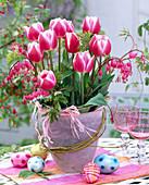 Tulipa 'funny widow' (tulip)