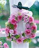 Centaurea (pink cornflowers)