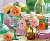 Pink (English rose)