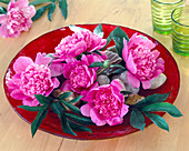Paeonia (peony) in red glass bowl