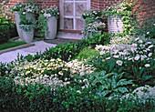 Exhibition Kientzler, white bed with Buxus (box hedge)