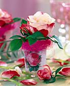 Pink 'Nostalgia' (Red-White Edelrose)