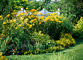 Spice up a yellow flowerbed with colorful perennials