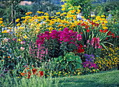 Spice up a yellow bed with colorful perennials