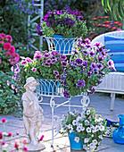 Petunia Calimero 'Maria', 'White', 'Purple Vein'