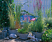 Zinc tubs with Scirpus 'Albescens' (striped cornices)