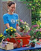 Plant orange tin box