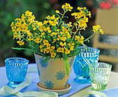 Erysimum Citrona 'Yellow' (Gold Lacquer)